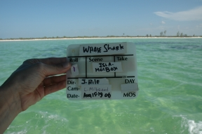 Jennifer Hile - Looking for sharks on Holbox Island