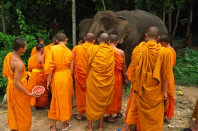 Jennifer Hile - Monks & Elephants Share Lunch, Thailand
