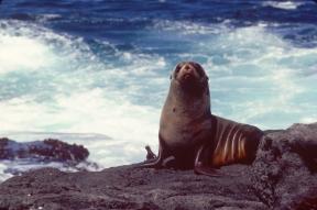 Jennifer Hile - Fernandina Island, Galapagos